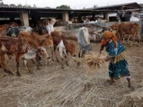 Budget 2018: Animal rights body asks govt to allocate funds for maintenance of gaushalas