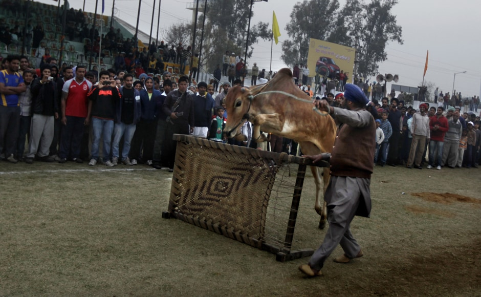 Giddy up! Giddy up! A bull jumps over a cot during the sports festival. AP