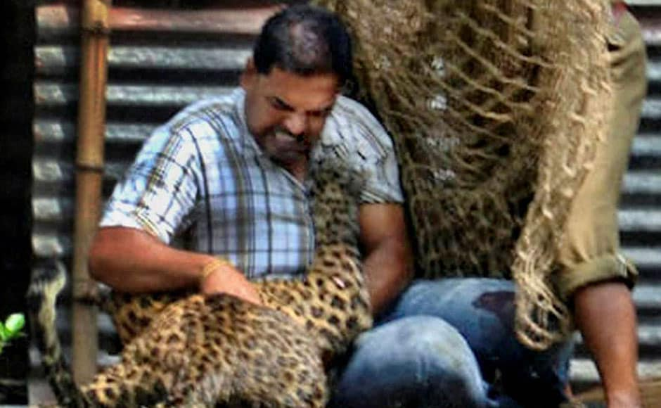 Forest officials shot the leopard with tranquiliser darts and it was captured after a few hours . PTI