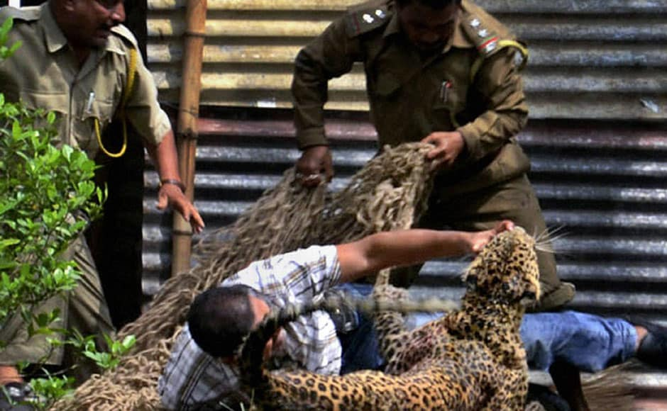 A man wrestles with a leopard as forest personnel try to catch it after it was found hiding inside the Oil India residential campus in Duliajan, Dibrugarh in Assam on Sunday. PTI