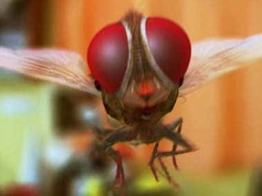'Eega': a housefly set to take south Indian cinema by storm