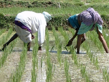 Pawar says that the paddy crop will not be affected: Reuters