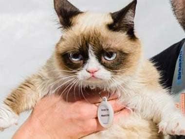 Internet meme sensation Grumpy Cat to star in upcoming film