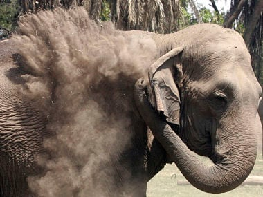 An elephant is seen in this file photo. Reuters
