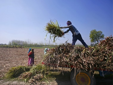 Workers unload stacks of sugarcane on a farmland in Sisola Khurd