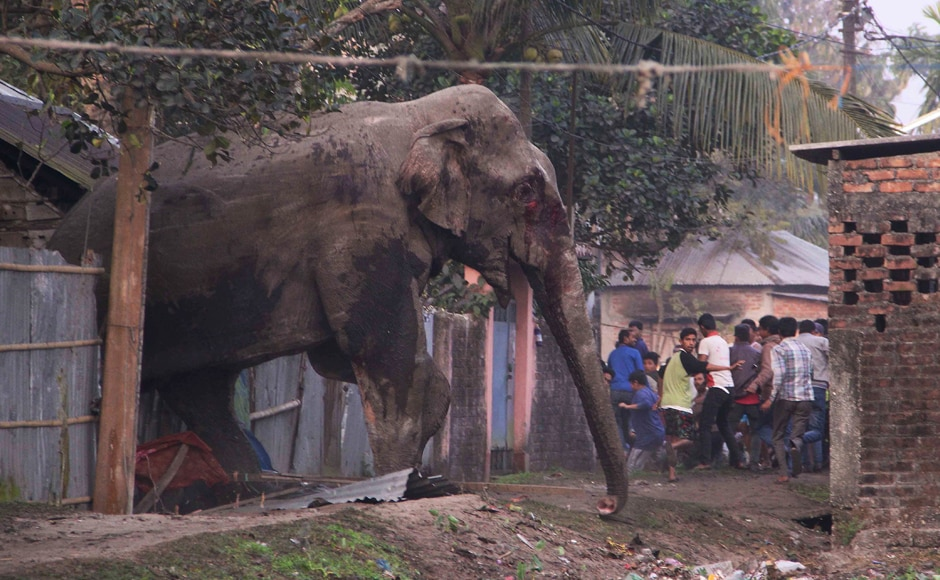 People run as they follow a wild elephant that strayed into the town of Siliguri. AP
