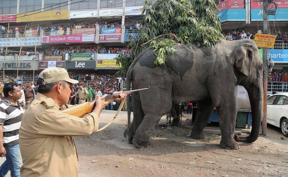 People watch as a Forest official tranquilizes the elephant which went on a rampage in a market area of Siliguri. PTI