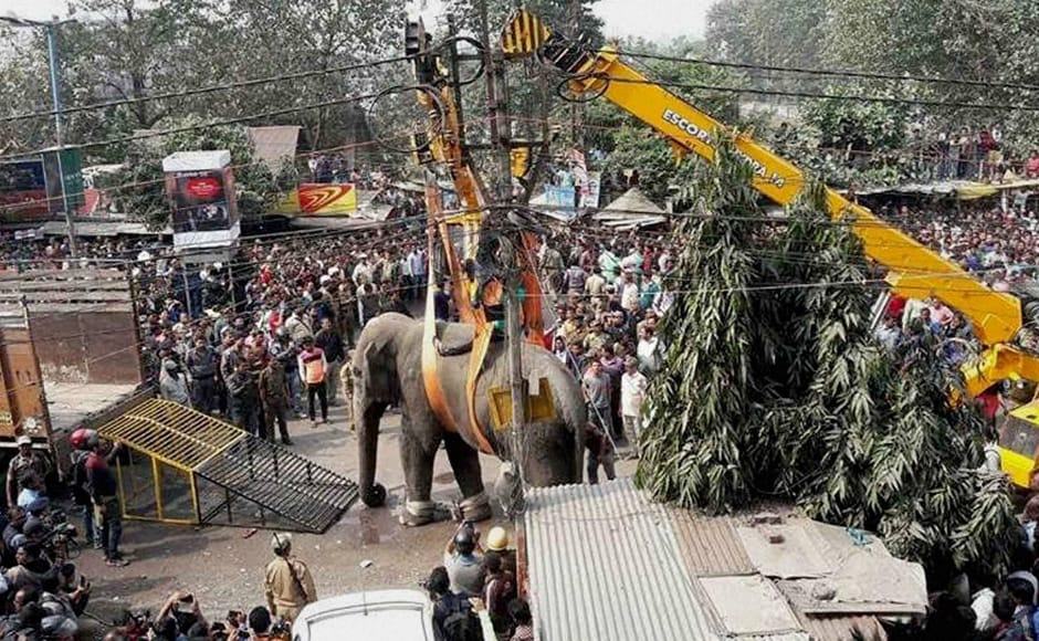 Locals watch as an elephant is being rapped up with the help of a crain who damaged vehicles infront of a shopping mall at Siliguri. PTI