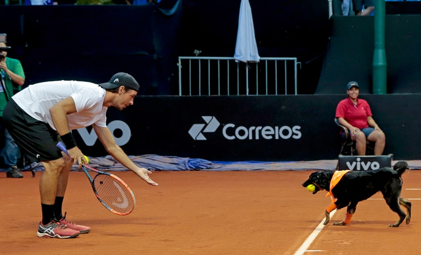 Portugal's Gastao Elias receives a ball from a dog during the Brazil Open tennis tournament . AP
