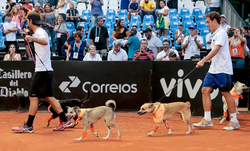 Tennis players Gastao Elias and Roberto Carballes enter the tennis court with four trained ball retrieving dogs, during an exhibition match of the Brazil Open. AP
