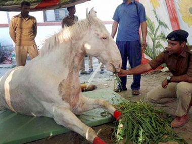 Police horse Shaktiman whose leg had to be amputated after he was beaten up. PTI