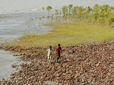 Mangrove plantations near Moushuni island, which is a part of the Sunderbans national park. REUTERS
