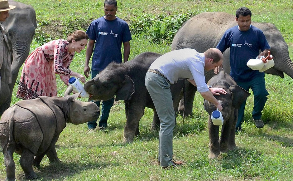 Prince William and Kate feeding elephant calves at the CWRC. PTI Photo