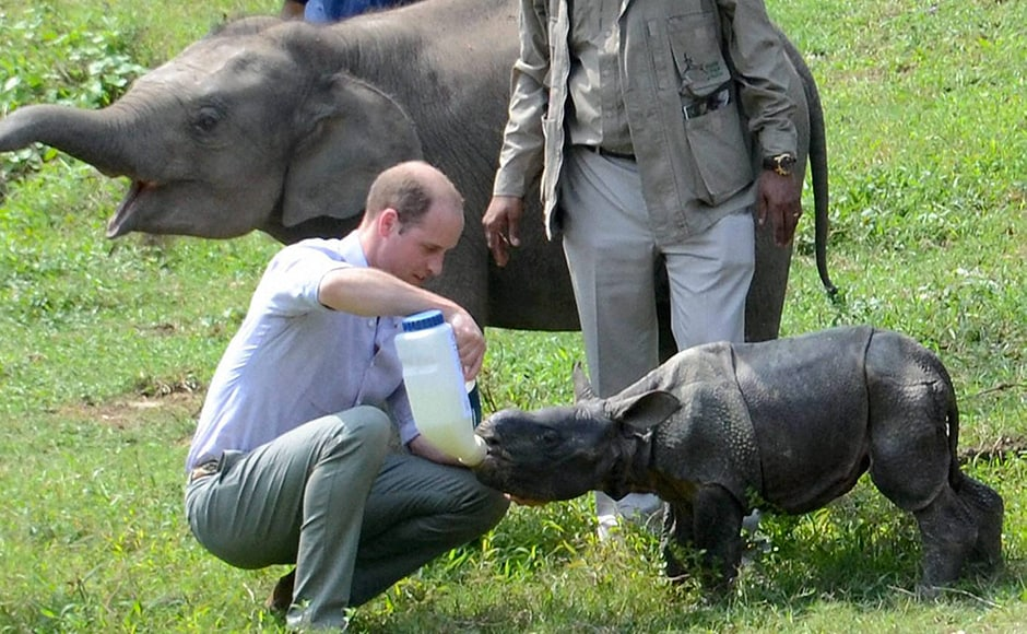 Prince William feeds a rhino calf during a visit to the CWRC. PTI Photo
