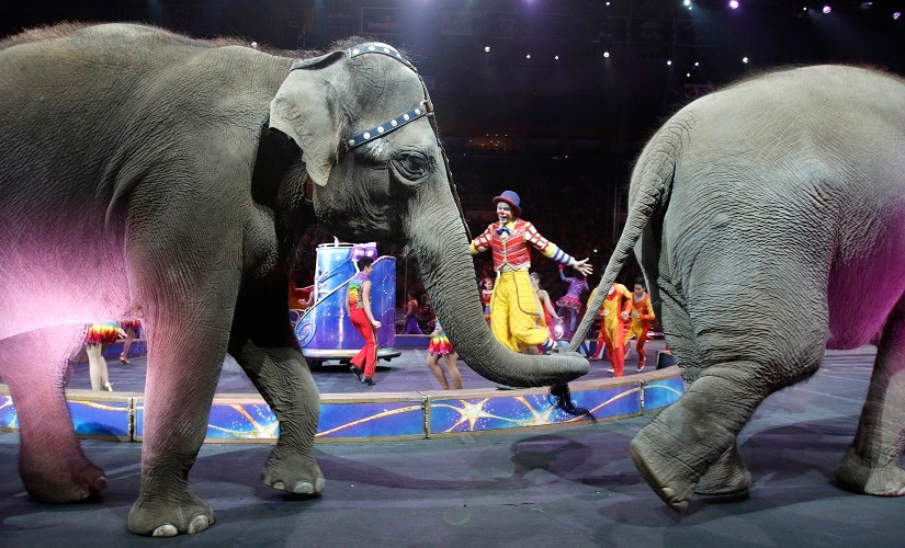 Asian elephants perform for the final time in the Ringling Bros and Barnum & Bailey Circus on Sunday. AP