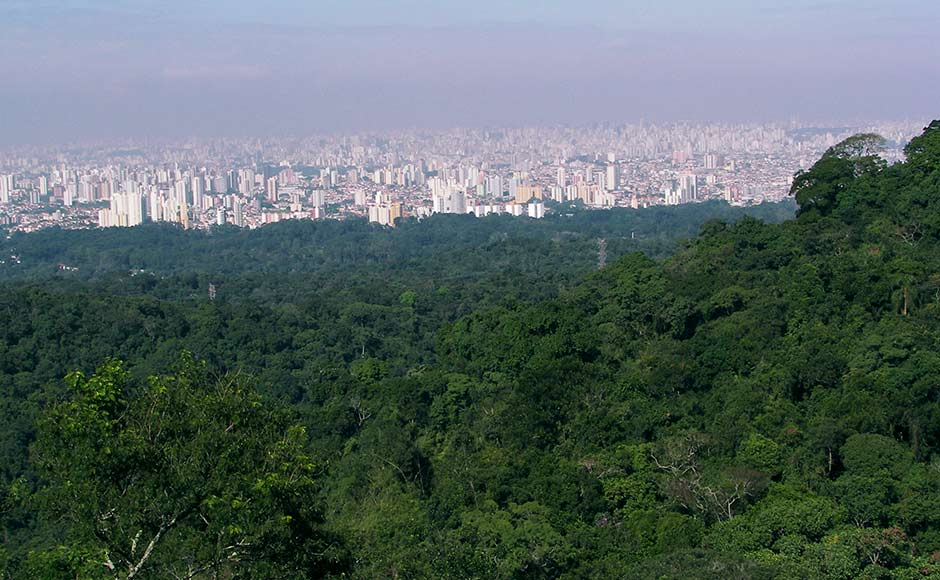 """The environment ministry will launch the """"Urban Forestry Scheme"""" in Pune, where 6,000 saplings will be planted to create an urban jungle on about 80 acres of land. PTI"""