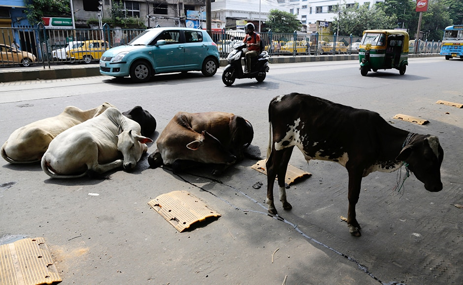 "All major unions, excluding RSS-associated BMS have joined the strike call, terming the government's assurances to look into their demands and the recent announcements for two-year bonus and hike in minimum wage as ""completely inadequate"". Stray cattle sit on a road as members of trade unions and opposition parties observe a nationwide strike in Kolkata. AP"