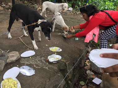 A volunteer feeding stray dogs. Photo: Ganesh Nayak
