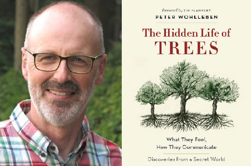 Peter Wohlleben, forester and author of 'The Hidden Lives of Trees'