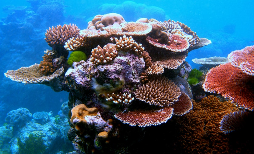 Coral Reefs are dying faster than ever. Image Courtesy: Wikimedia Commons