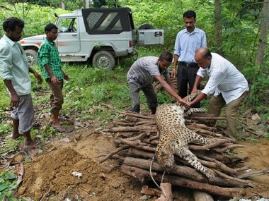 Forest officials prepare a pyre for a dead male leopard killed tea plantation workers in Assam. Reuters
