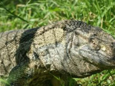 Four monitor lizards died. Image courtesy: Delhi Zoo
