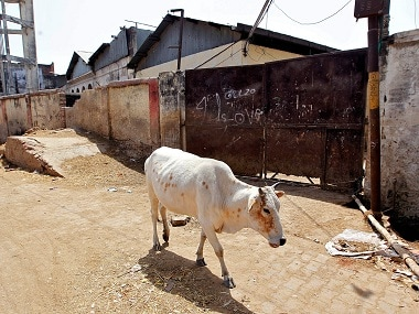 A cow walks past a closed slaughterhouse in Allahabad, India. Reuters