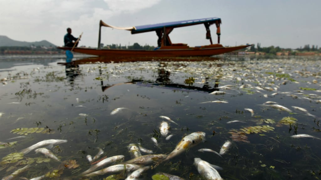 Thousands of dead fish were found floating on the lake on Sunday due to depletion of oxygen and the fluctuation of water temperature, according to local media. Reuters