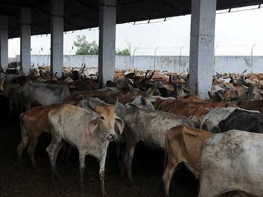 A new government notification restricts the sale of cattle for slaughter. AFP