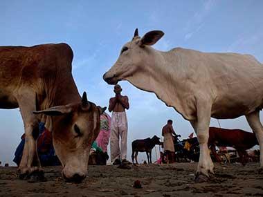 BJP's cattle restrictions. Representational image. AP