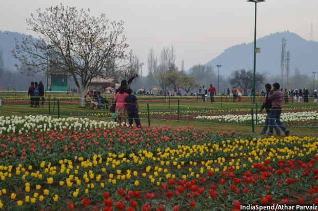 The 33-hectare Tulip Garden in Srinagar is the new addition to Kashmir's tourism spots since 2008. However, in recent months, after the national media have been swamped with stories of violence in the Valley, tourist arrivals declined.