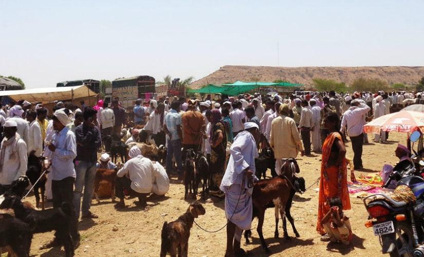 Cattle market in Marathwada. Photo courtesy: Parth MN