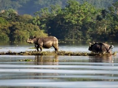 One-horned rhinoceroses are seen at the flooded Kaziranga National Park in the northeastern state of Assam. Reuters