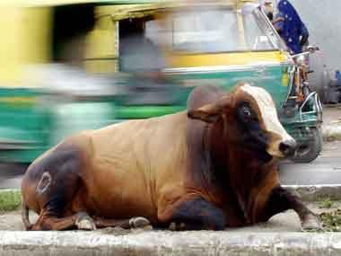 Cow slaughter has become a huge debate. AFP