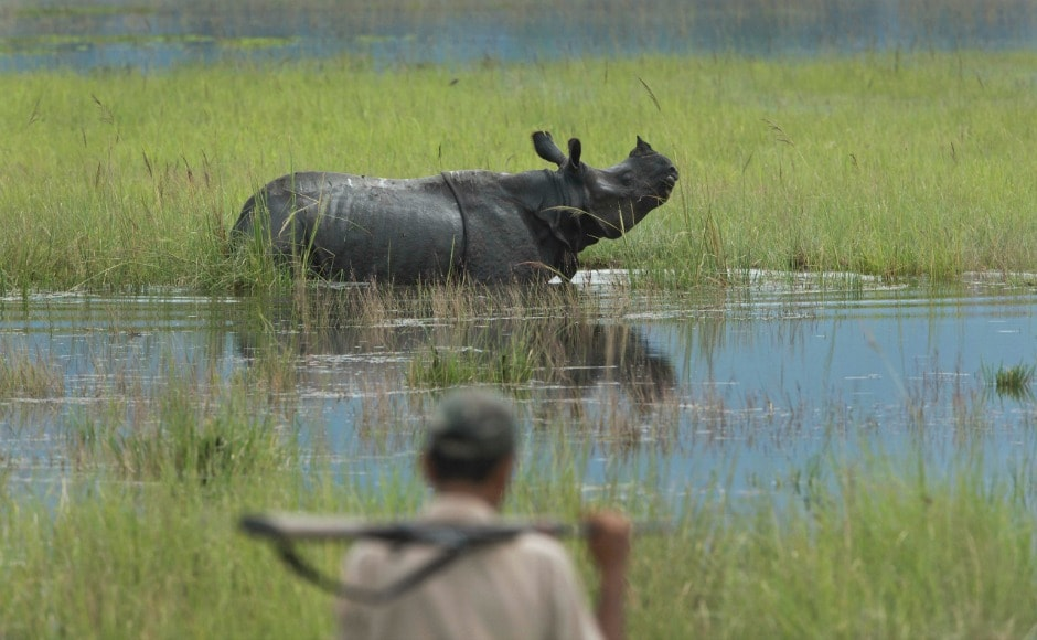 The floods in Assam has drowned more than half of the area of the Kaziranga National Park making the animals very vulnerable to poachers. AP