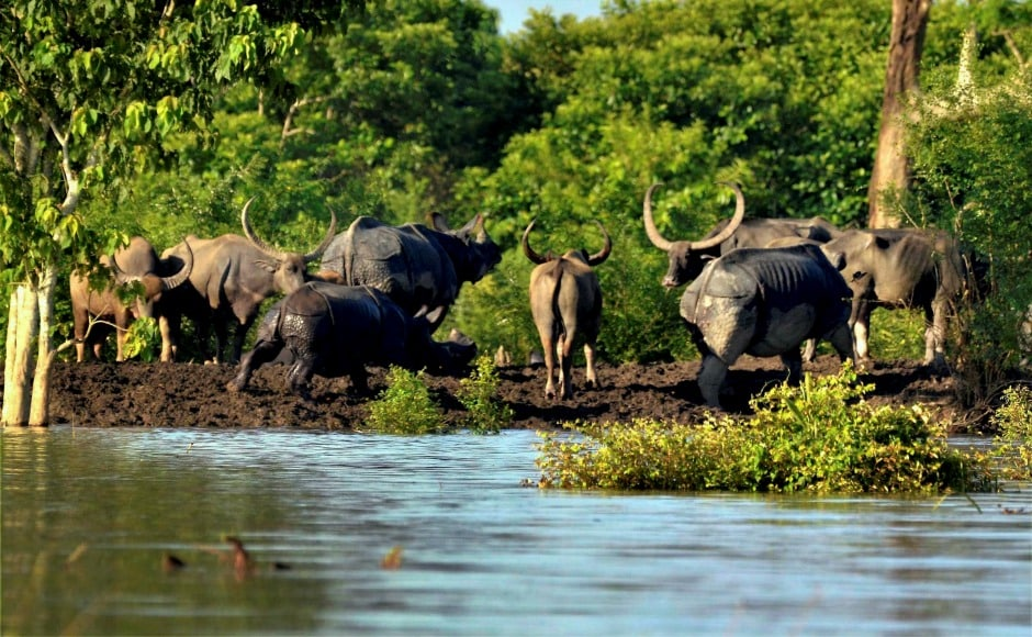 Floods in Assam have also inundated the Kaziranga National Park with efforts underway to help the animals. PTI