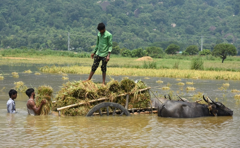 People load their harvested crop onto a buffalo cart in a flooded paddy field at Mayong village in Morigaon district in Assam to escape to dry areas. According to a report by the Assam State Disaster Management Authority, another person died in the district on Sunday. Reuters