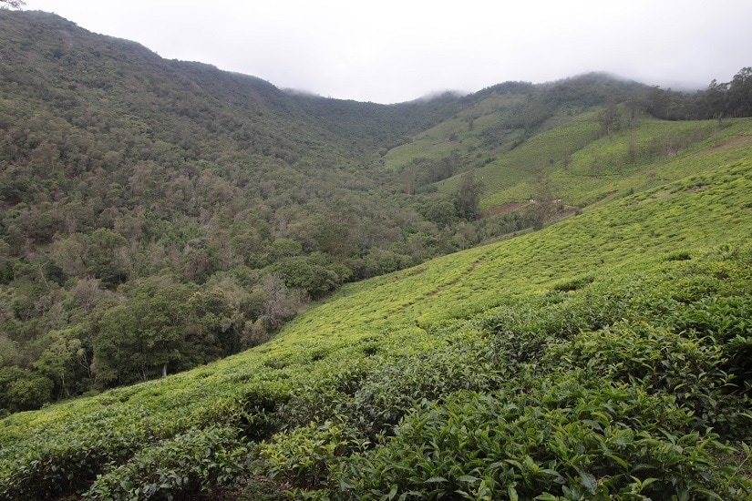 A view of the Nilgiri hills. Photo: Sibi Arasu