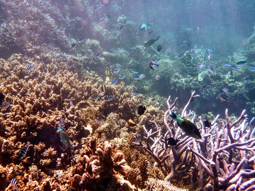 The corals reefs – an underwater paradise with an unpleasant reminder — the bleached coral at the bottom left