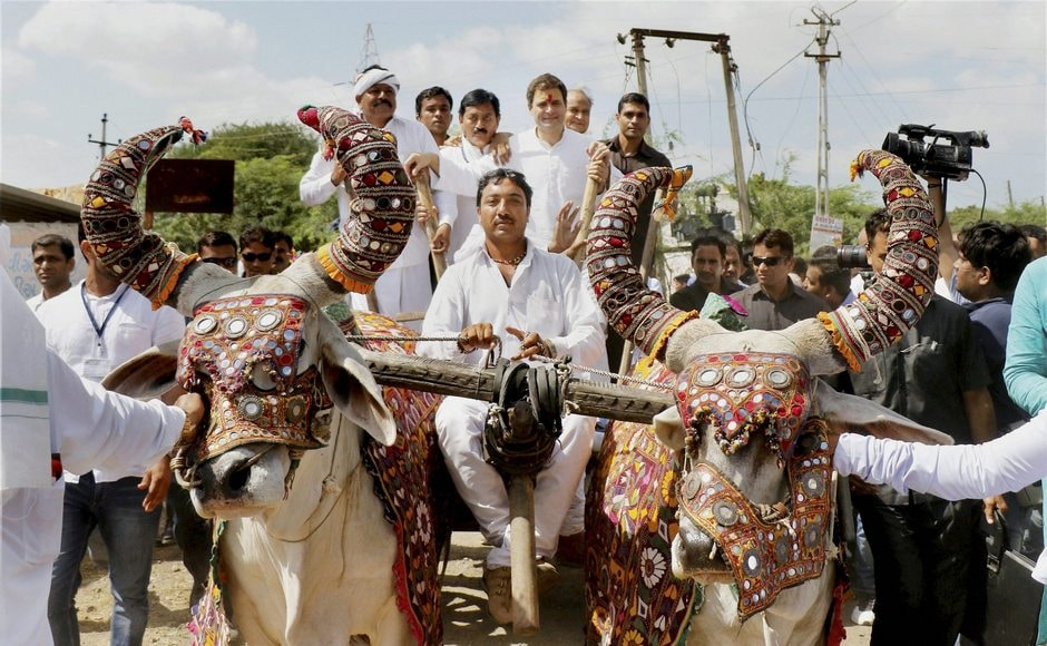 From Dwarka, Gandhi headed to Hanjrapar, where he was accorded a traditional welcome by villagers. He even took a bullock cart ride to show solidarity with the farming community. PTI