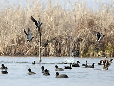 File photo of wetlands in Kashmir. Getty images