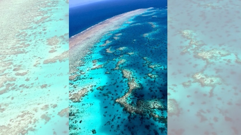 The barrier reef seen from the sky. All images courtesy the writer