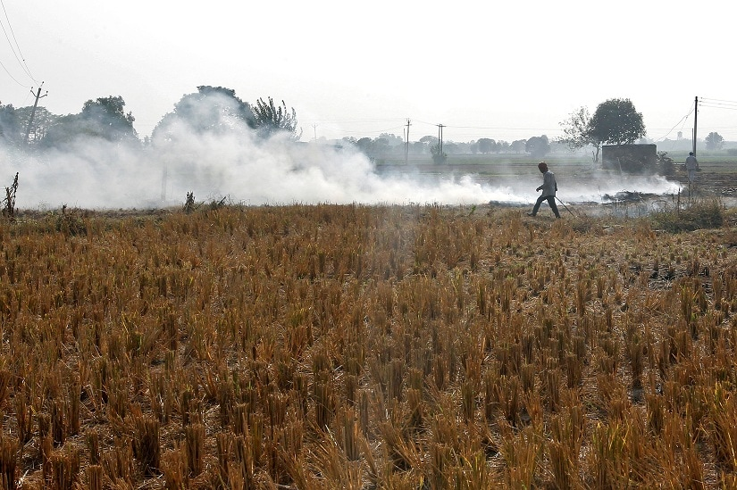 A man burns paddy waste stubble in a field on the outskirts of Chandigarh, India November 8, 2016. REUTERS/Ajay Verma - D1BEULQOFXAA