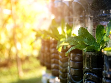 7 Ways to live a Clean, Green Life