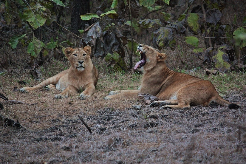 Waking up, Sasan Gir