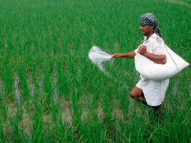 A farmer spreads fertilizers on his rice plants in Patra village in the northern Indian state of Punjab