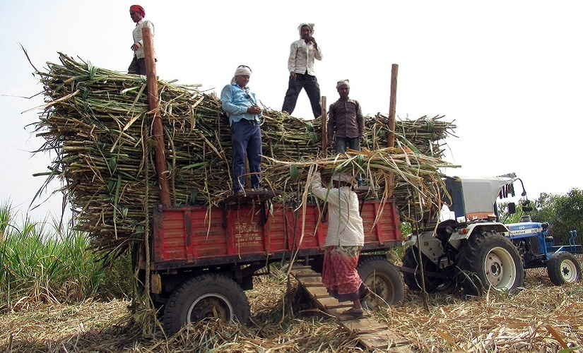 Mukta and others load the cut sugarcane on to trucks. Firstpost/Parth MN