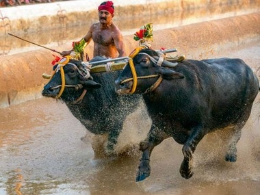 Supreme Court set to hear PETA's plea seeking ban on Karnataka's Kambala on 12 February