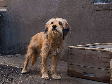 Benji movie review: Simplicity and warmth of Brandon Camp's film makes the adorable dog a protagonist to root for