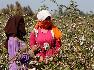 Union minister says cotton production nearly doubled since Bt Cotton's introduction in 2002; facts show yields have stagnated